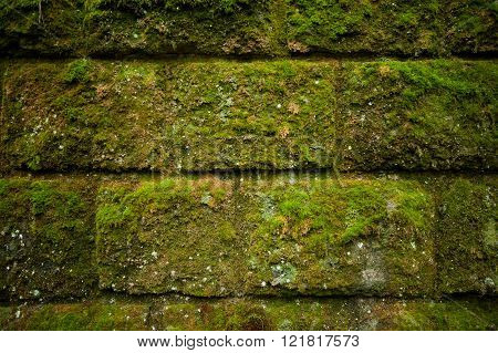 Moss On Stone Blocks Wall