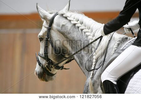 Unknown Lady Rider In The Saddle Of A Grey Colored Dressage Horse