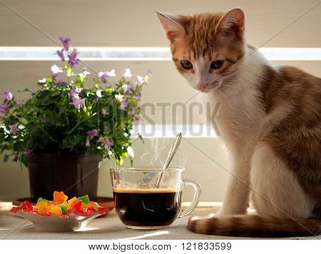 Cute kitten, coffee, sun and saucer with colorful candied fruits
