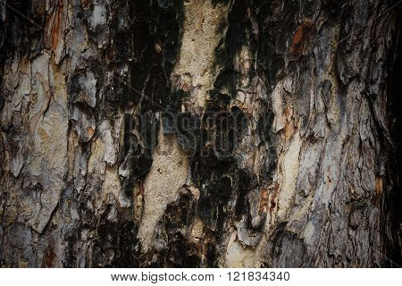 Old Tree Bark Textured Background
