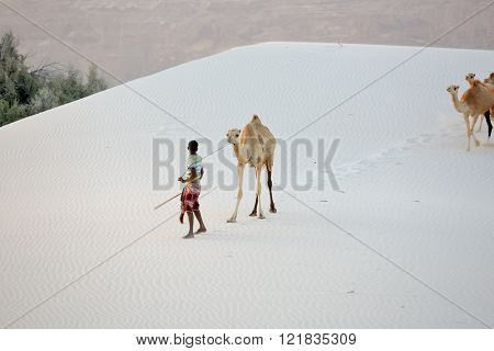 SOCOTRA ISLAND, YEMEN  FEBRUARY 15, 2016: unidentified cameleer (camel driver) in the white sand dunes near Steroh village