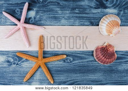 sea shells and starfish on the wooden board