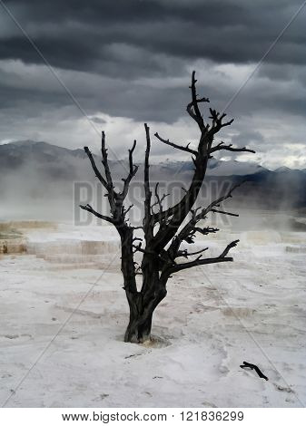 Dramatic sky over lonely dead tree in Yellowstone