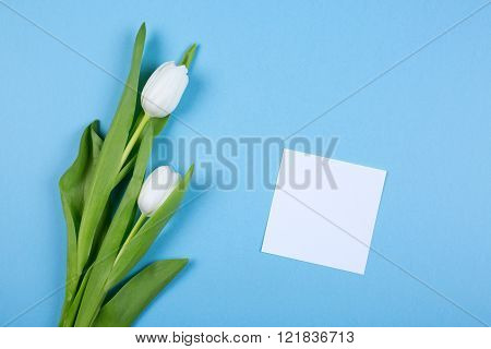 white tulip flower over blue background with white paper sheet