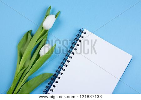 white tulip flower with note book over blue background