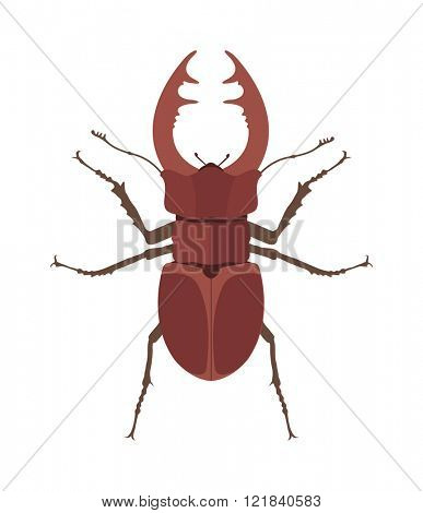 Close up brown horned beetle cartoon vector illustration. Rhino bug insect.