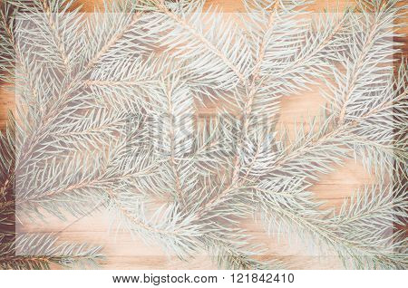 Fir Twigs And Conifer Cones Backgrounds