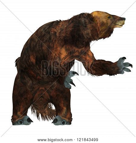 Megatherium was one of the largest ground sloths that lived in Central and South America in the Pliocene to the Pleistocene Periods.