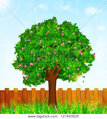 Spring Background With Green Grass, Blossoming Tree And Garden Fence