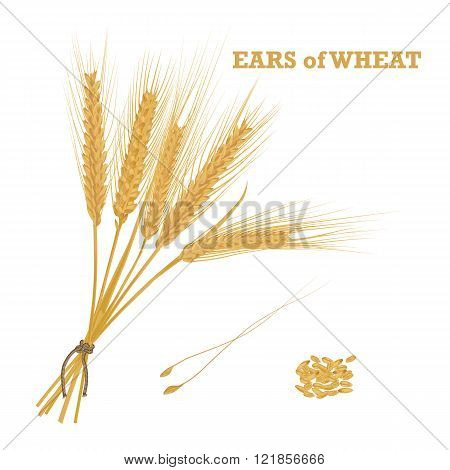 Ears Of Wheat Tied With Twine And A Handful Of Grain