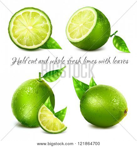 Collection of fresh limes and lime slice with leaves. Fully editable handmade mesh. Vector illustration.