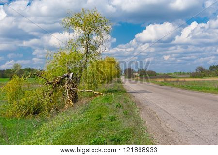 Spring landscape with broken willow on a roadside