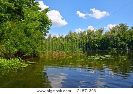 Sunny day on the river with reeds and forest against a blue sky