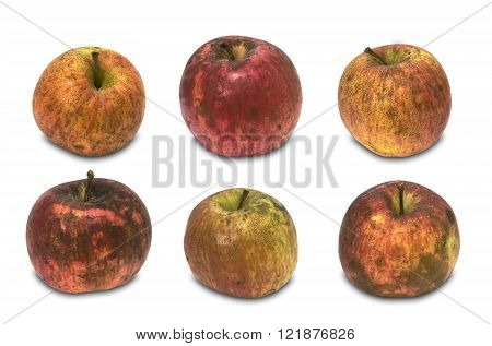 six pure organic apples over white background