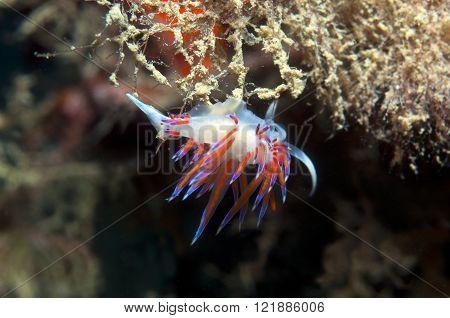 small invertebrate looking food on algae down
