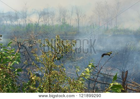 Smokey distroyed forest bush caused by bush fire during dry season in Borneo.