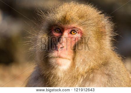 Monkey in wildlife
