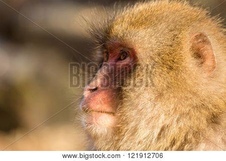 Side profile of monkey
