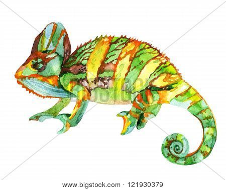 Watercolor chameleon illustration. Watercolor chameleon painting illustration isolated on white background