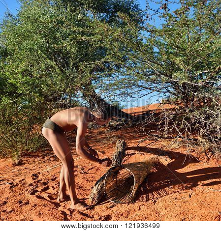 KALAHARI NAMIBIA - JAN 24 2016: Bushman hunter checks a trap for the porcupine. San people also known as Bushmen are members of various indigenous hunter-gatherer peoples of Southern Africa