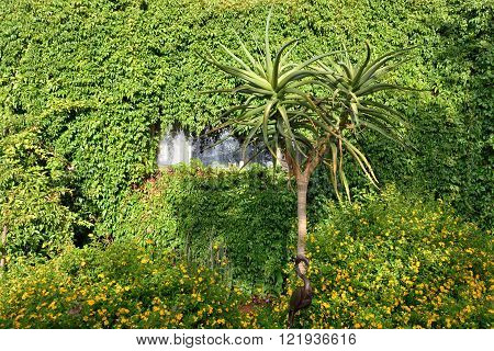 Wall of an accommodation unit in in Toko Lodge covered with green plant. Toko is the gateway to Western Etosha Damaraland and the unspoilt Kaokoveld