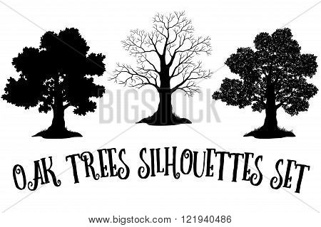 Set of Oak and Grass Silhouettes, Trees Without Leaves and Crowns Versions with Different Study of Details. Vector