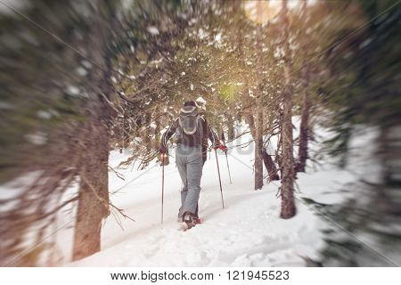 Rear view of cross country snow shoe hikers in snow pants trudging along a hill slope with trees