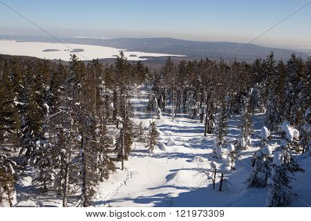 NIZHNY TAGIL, RUSSIA - MARCH 10, 2016: Trees standing in the snow. The sun illuminates the trees and snow. Snowy forest on the summit of Mount White. White Mountain - the mountain of the Urals.