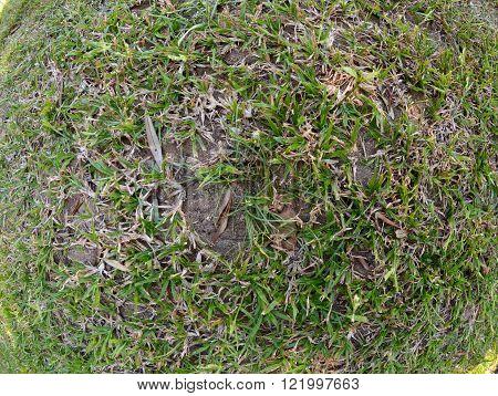 Grass texture close up pattern fish eye lens
