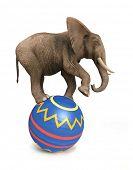 elephant balance on ball poster