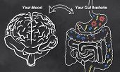 Mood and Gut Bacteria with chalk on Blackboard poster