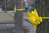 closeup of a yellow ribbon tied around an oak tree in a residential neighborhood. poster