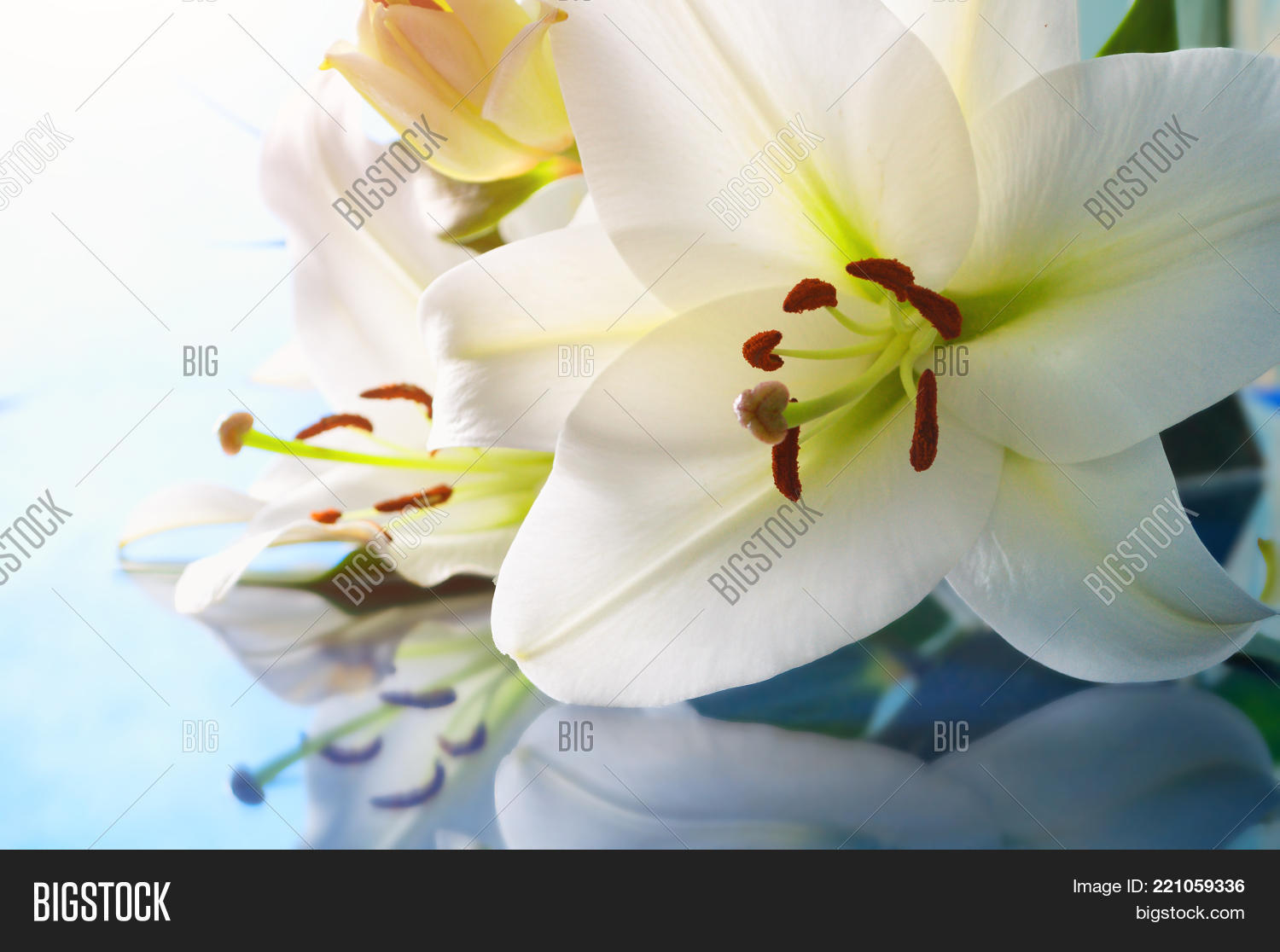 Flower background image photo free trial bigstock flower background lily flower lilium navona selective focus at the lily flower stamens create a lightbox izmirmasajfo