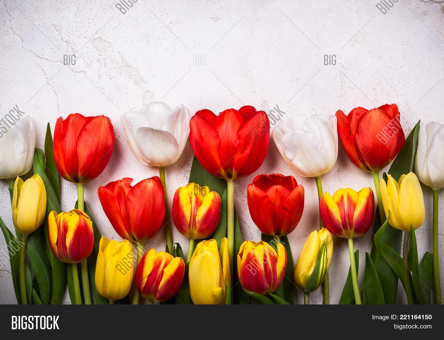 Colorful tulips with branches pussy willows on old background. Festive  Easter concept with copy space