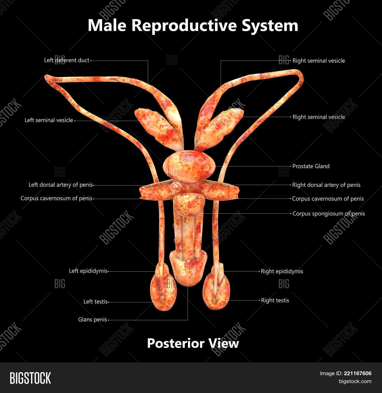 3d Illustration Male Image Photo Free Trial Bigstock