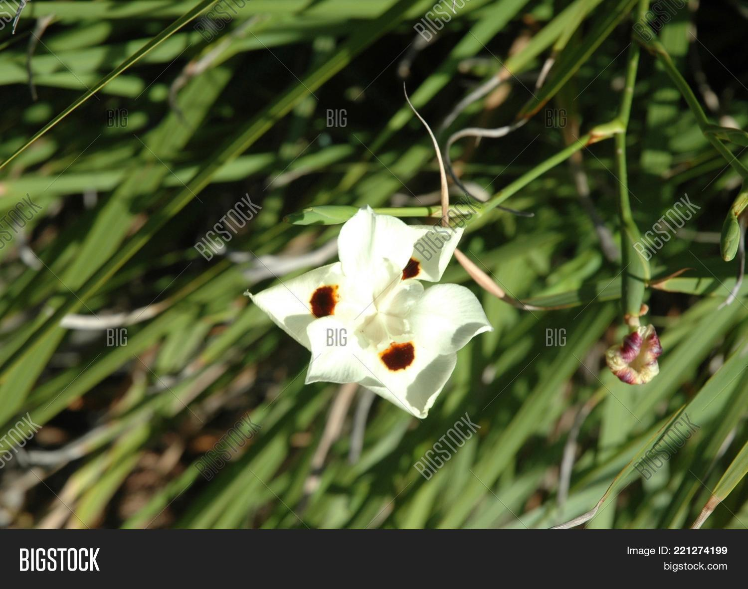 Close white flower image photo free trial bigstock a close up of a white flower the petals are pointed the flower mightylinksfo