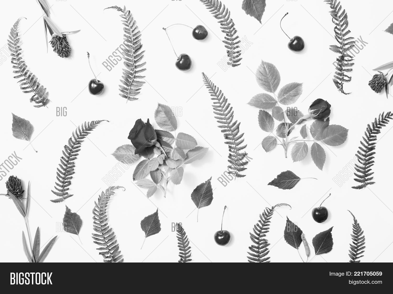 Pattern Blades Grass Image Photo Free Trial Bigstock
