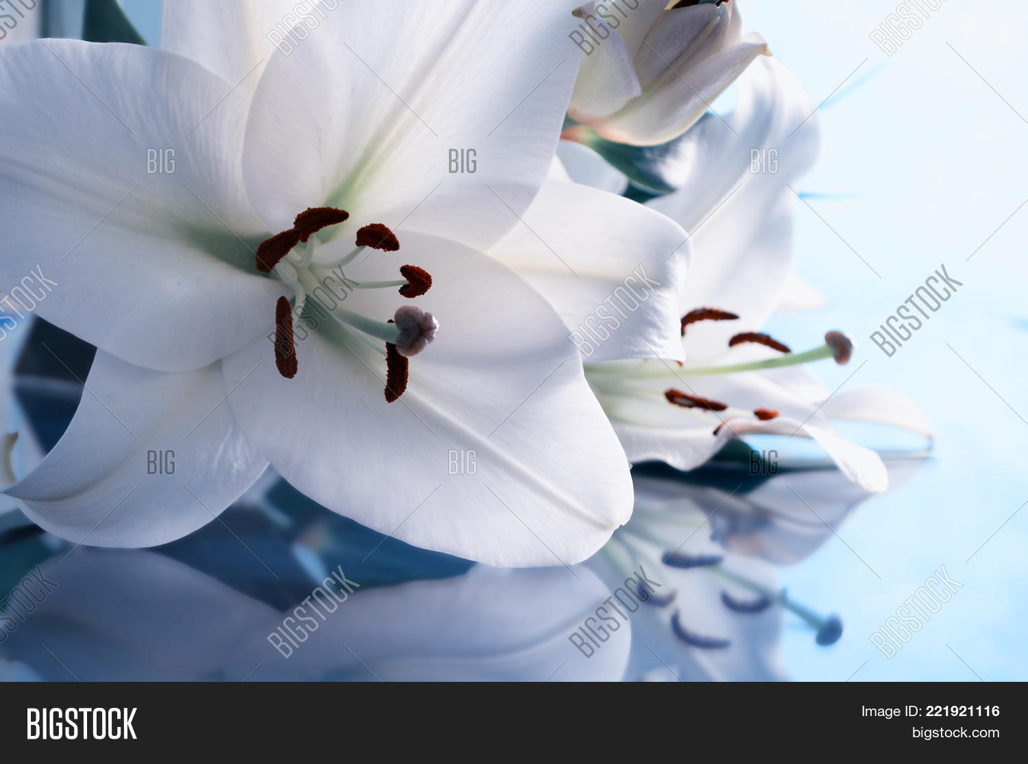 Spring background cold image photo free trial bigstock spring background in cold tones spring lily flower in latin lilium navona colorful izmirmasajfo