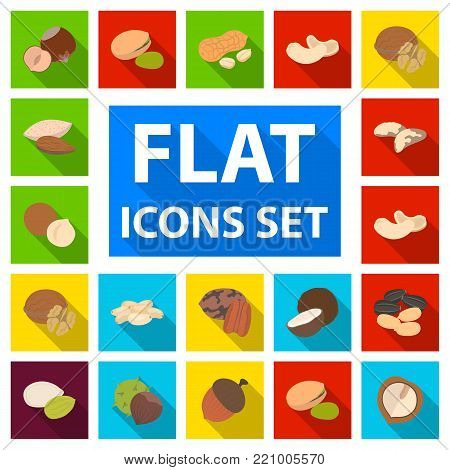 Different kinds of nuts flat icons in set collection for design.Nut Food vector symbol stock  illustration.