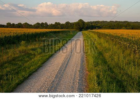 Country gravel road between two fields of corn at sunset in the midwest.