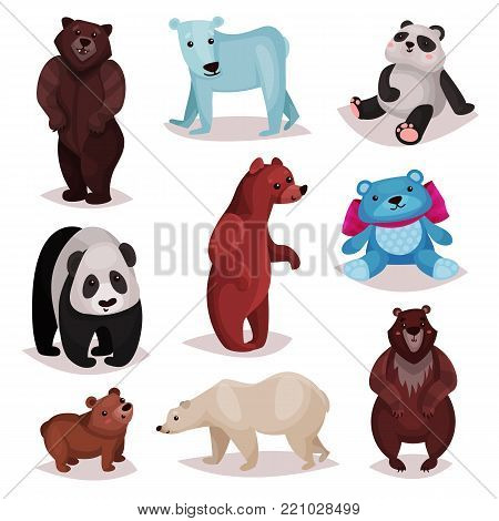 Different species of bears set, wild bears and toys furry bear characters cartoon vector Illustrations on a white background