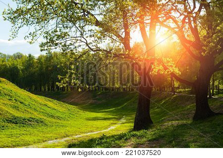 Summer landscape. Green summer trees and sunset light shining through the branches. Colorful summer nature, summer sunny landscape view. Colorful park in summer sunny day, summer landscape scene