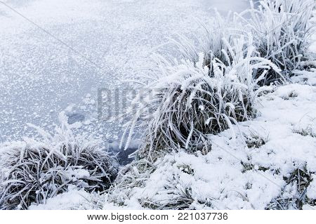 A closeup of grass with hoar frost on the shore of a pond in wintertime