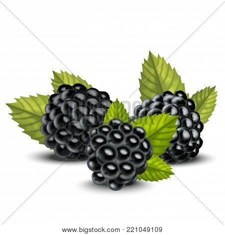 Realistic Detailed 3d Blackberries with Green Leaves Natural Fresh Sweet Isolated on White Background. Vector illustration of Ripe Blackberry