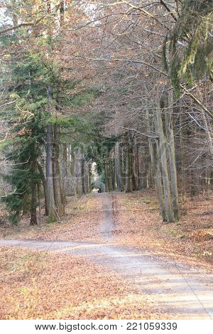 forest track in the forest of weissach. The location in in baden-wuerttemberg