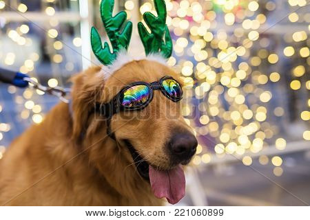 Cute Golden Retriever With Bokeh Background