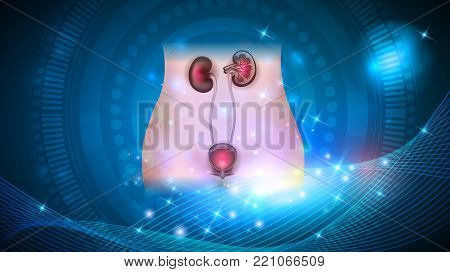 Kidneys and urinary bladder health care on a glowing abstract background