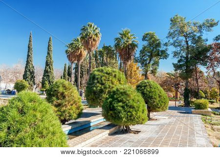 The trees in Eram garden, or Bagh-e Eram (Garden of Paradise) is a large garden with a palace in it. Built in the Qajar era.  Eram means heaven. Eram Garden therefore is so called for its aesthetic attractions resembling heaven. The building and the garde