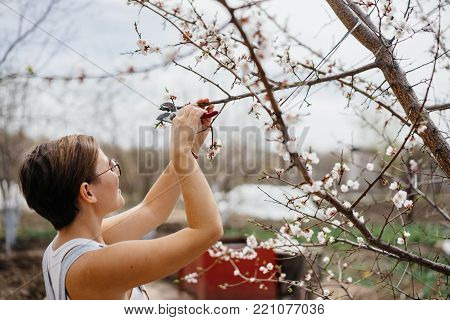 woman farmer in denim overalls with pruner. Pruning branches on a tree.