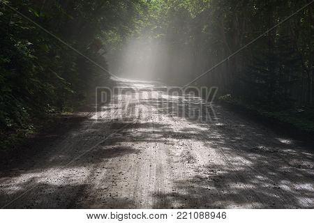 Beautiful sunrays falling into a tunnel created by the dense forest of Shiretoko National Park, Hokkaido, Japan